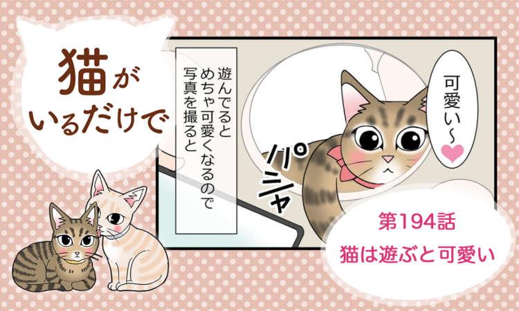 【まんが】第194話:【猫は遊ぶと可愛い】まんが描き下ろし連載♪ 猫がいるだけで(著者:暁龍)