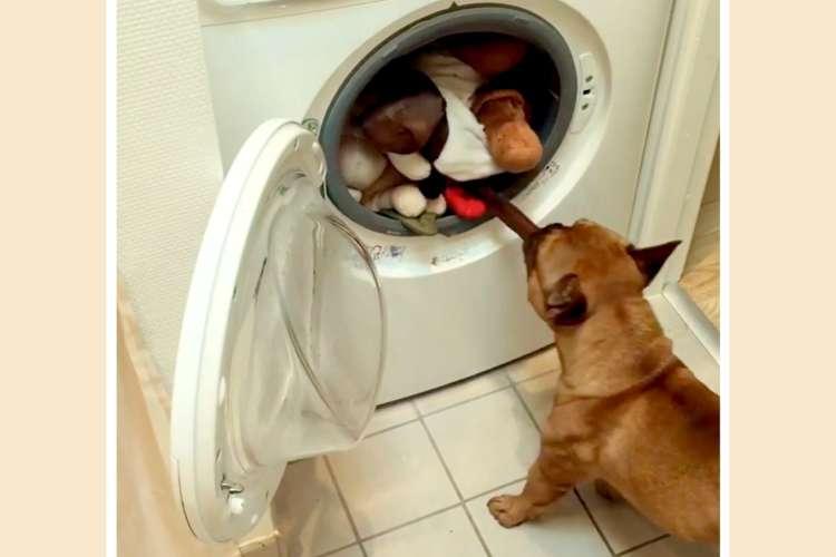 お気に入りのぬいぐるみを、洗濯されちゃった! → 必死に救出するワンコの姿が…(*´艸`*)