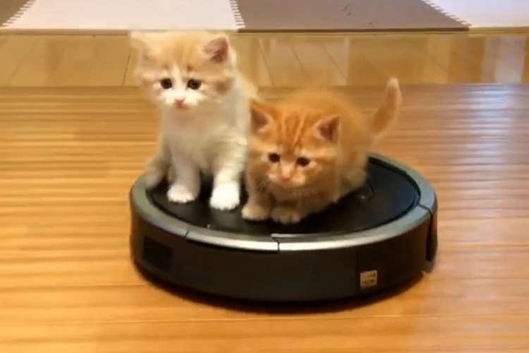 お掃除ロボット初乗車!? 行きたい方向に行けず、翻弄される子猫ちゃんたちが可愛かった♡
