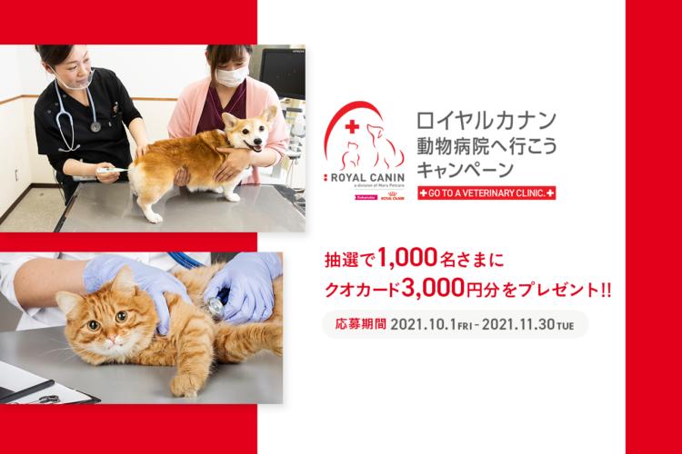 大切な愛犬・愛猫が末長く元気に暮らすために「定期健康診断」を!