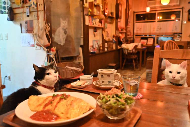 レトロな雑貨と猫たちに囲まれてのんびりできるカフェ