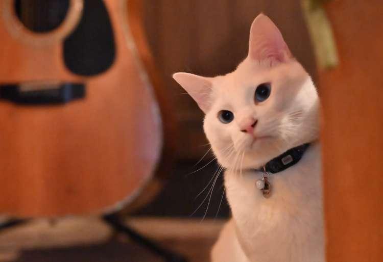 ZIN君とマスターの趣味のギター