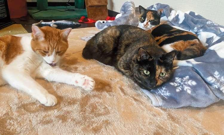 【猫びより】第12回 本屋さんが選ぶ猫の本【私のイチオシ!】(辰巳出版)
