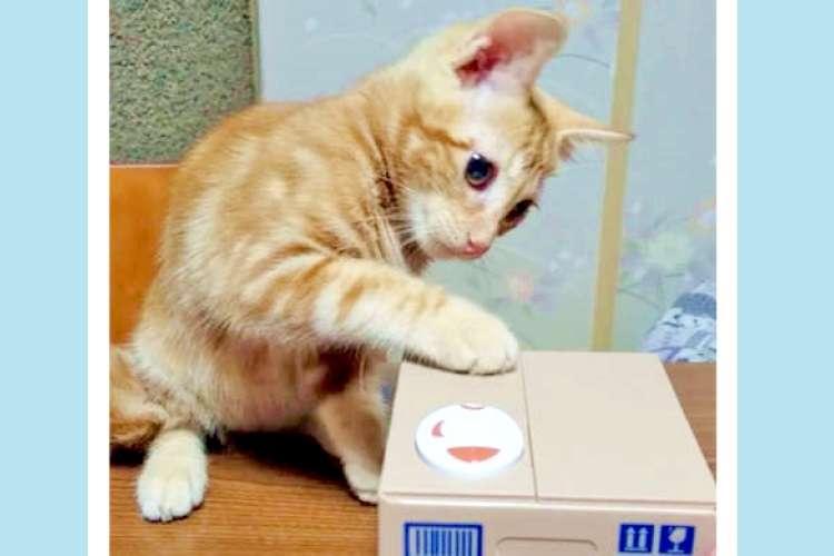 箱の中の「友達」と遊びたい子猫ちゃん! ジっと見つめたり、シュッと手を伸ばすお誘いがカワいかった♡