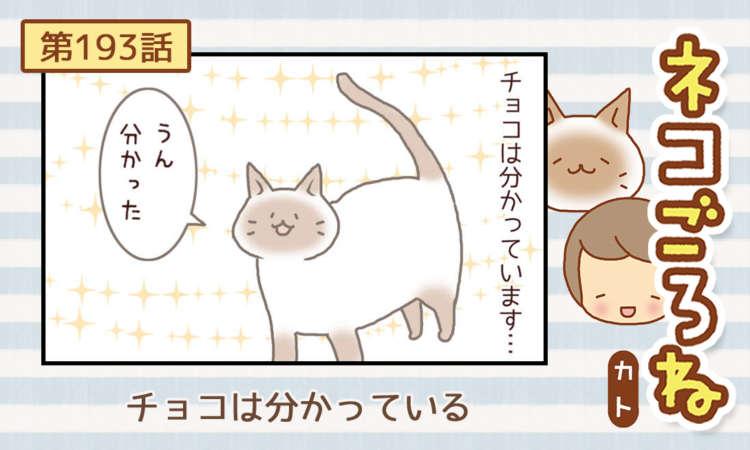 【まんが】第193話:【チョコは分かっている】まんが描き下ろし連載♪ ネコごろね(著者:カト)
