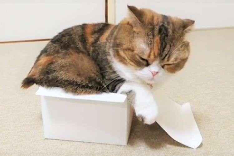 小さな箱に、どうしても収まりたいニャンコ → ピッタリ収まり『満足げ』な様子が…(*´艸`*)♡