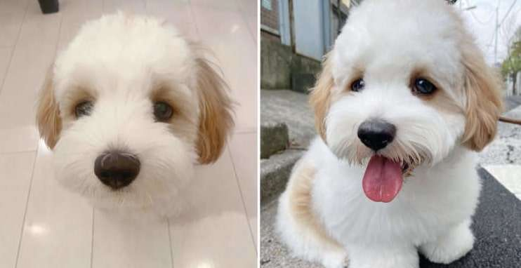 【二次元からやってきました?】パステルカラーのモフモフ犬。アメリカのキャラクターにそっくり!?