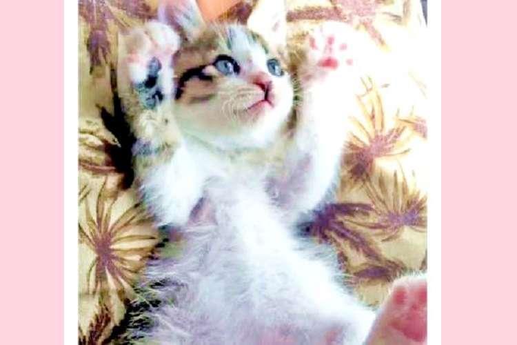 お腹をこちょこちょされると → んパァ! 子猫ちゃんの可愛すぎる反応に、胸キュンが止まらないッ♡