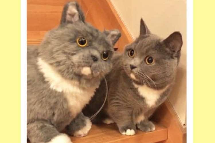 新しい「お友達」は自分そっくりな猫! 瓜二つな相手に、ちょっと困った様子をみせるニャンコさん♪