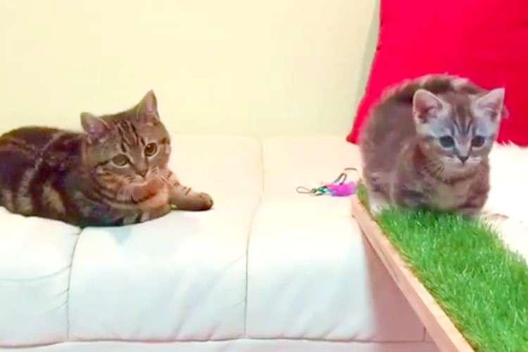 【足元に気をつけて…!】橋を渡る弟を、心配そうに見守る兄猫。その優しさにキュンとする♡