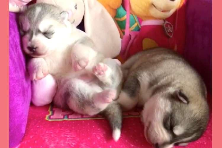 ぐっすり眠る子犬の足が、ピクピク動いた! → 隣で眠るお友だちに、かわいいハプニングが…(*´Д`)